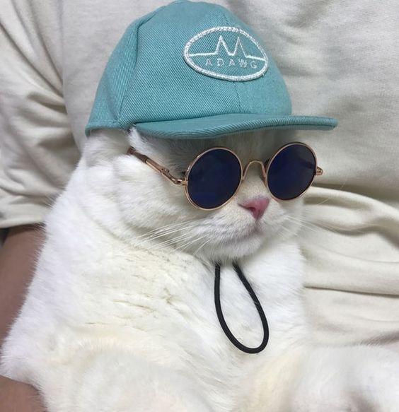 Cool kitty!