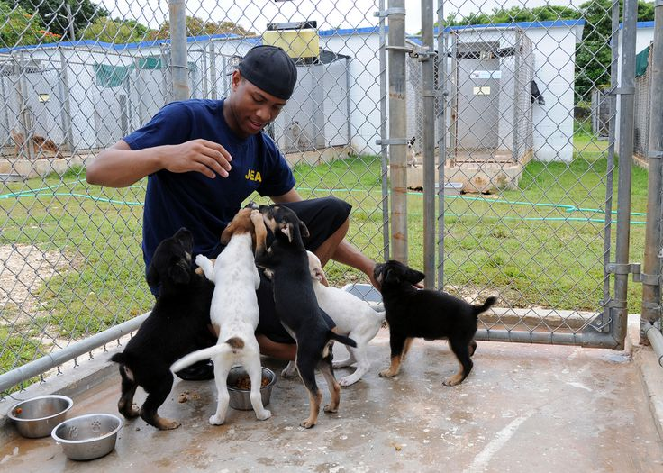16++ Animal shelters to volunteer at ideas in 2021