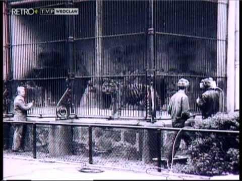 """25 lat """"Z kamerą wśród zwierząt"""": http://youtu.be/2YdXe_2j0uw"""