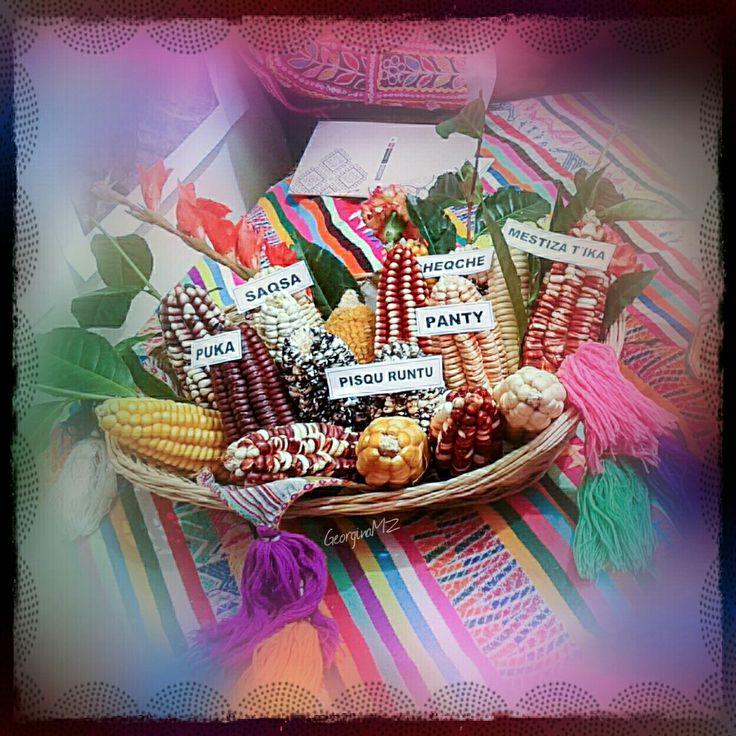 Variedades de maíz cusqueño #Peru #color 🌽 GeorginaMZ.com