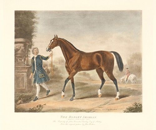 WOOTON, John. The Darley Arabian (Imported from Aleppo 1705.)  Contemporary restrike engraving from the original plate, published by Fores, after the picture by John Wooton. 360 x 410 mm.  The property of John Brewster Darley Esq of Aldby. #equestrian