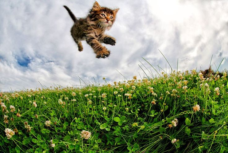Just a Gallery of Kittens Mid Pounce