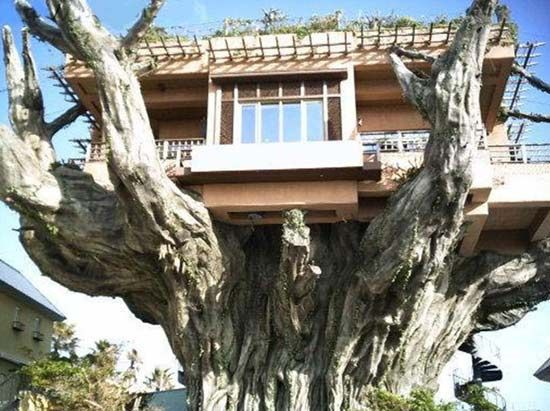 amazing: Geek Houses, Houses For Sales, Okinawa Japan, Crazy Houses, Trees Houses, Some People, Big Trees, Weird Houses, Cool Places