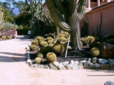 Cactus Landscaping – Types of cactus 4 the garden ~ via Gardeningknowhow.com/ornamental/cacti-succulents/scgen/cactus-landscaping.htm