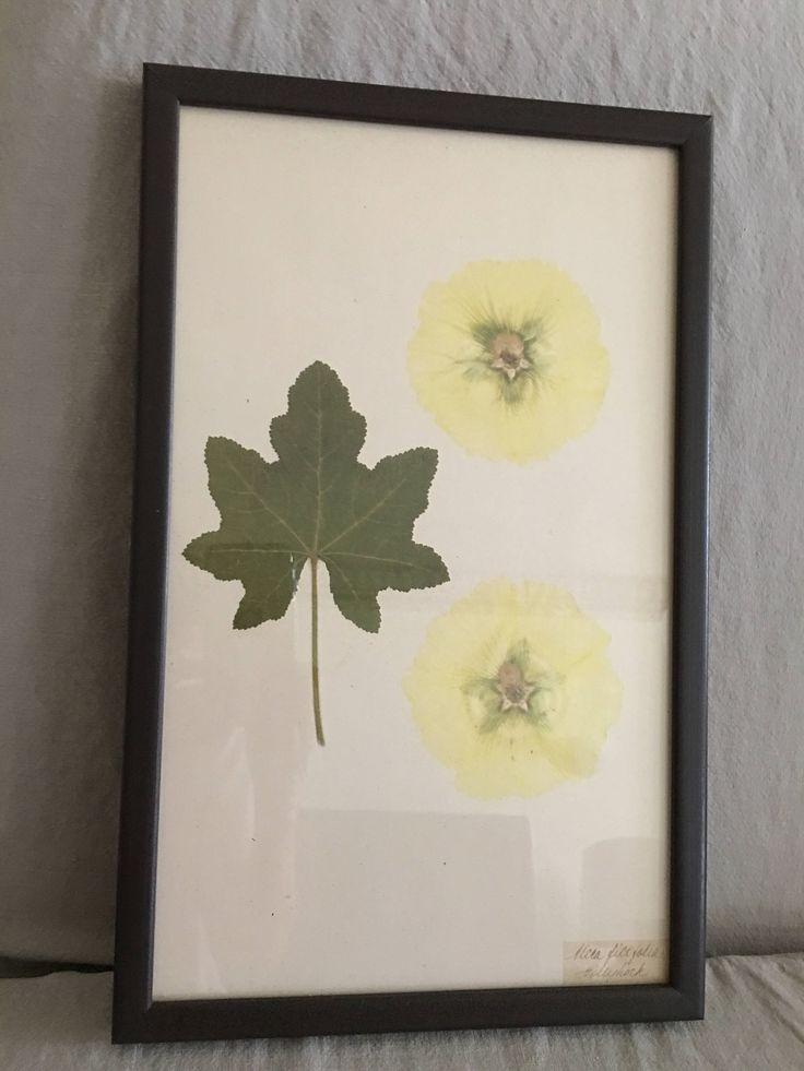 Flower Leaf Art Botanical Framed Print By Kristina Fine