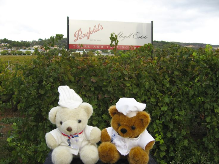 Bechamel Bear taking one of his friends to one of Australia's most famous wineries #Penfolds. Amongst their vineyards in Adelaide.