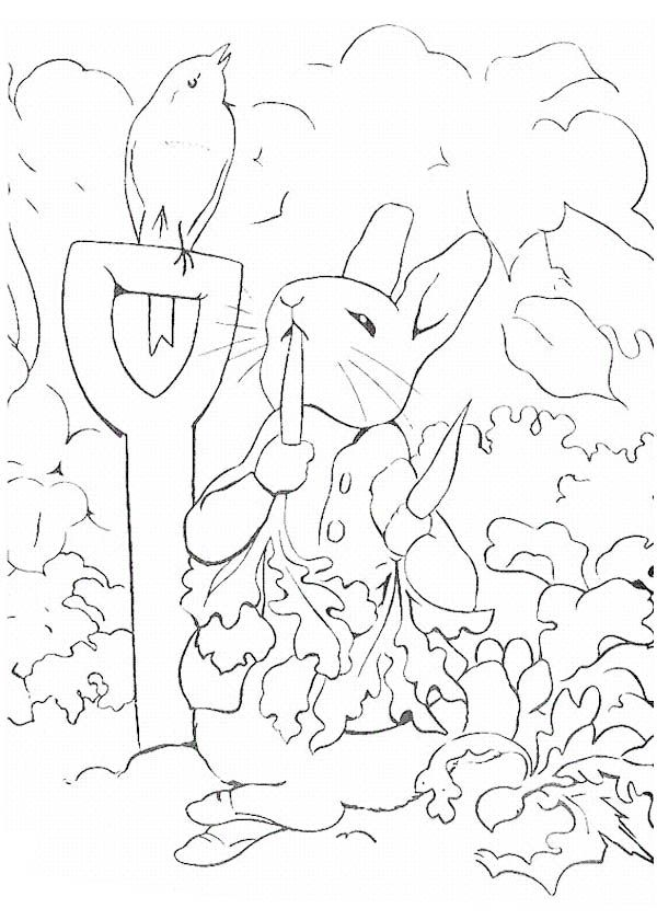 Peter Rabbit Eating So Many Carrot Coloring Page