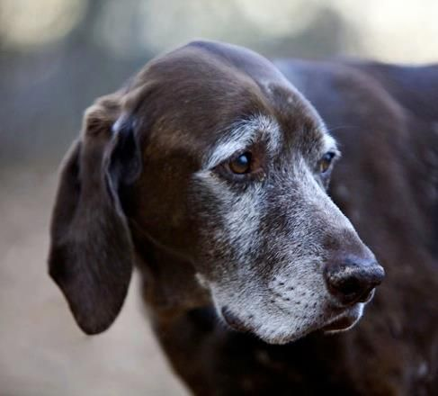 I love puppies, but there is nothing like the sweet soul of an old dog.