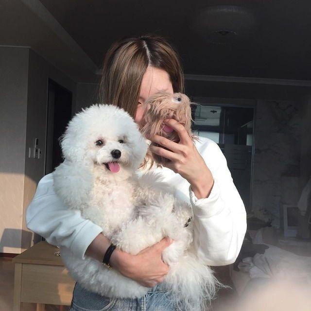 Cute animals #bichon #frise #aesthetic bichon frise aesthetic, bichon frise  black, bichon frise puppy wallpaper, bichon…   Бишон фризе, Бишон,  Мальтийские собаки