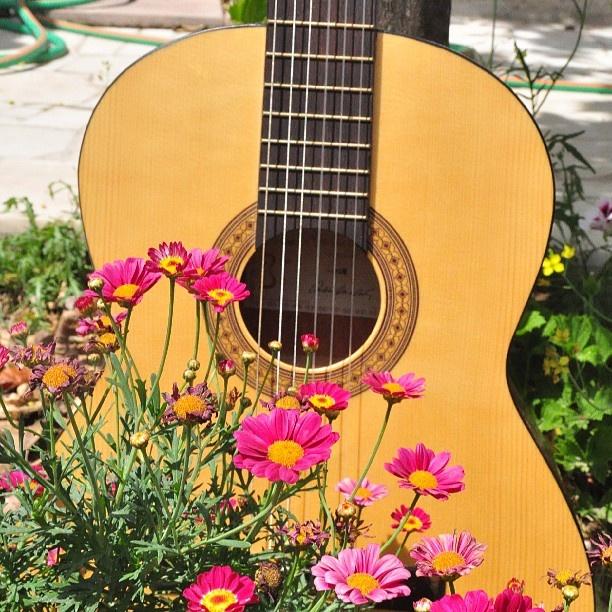 #portalpecaapeca #guitar #party #GardenParty Follow us:  http://www.pecaapeca.com http://www.facebook.com/portalpecaapeca