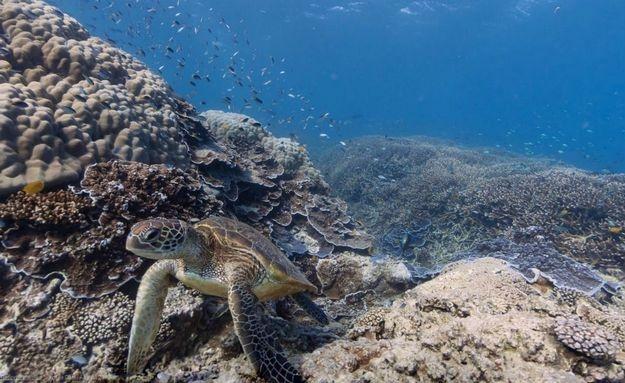 #Tartaruga posa para foto no #mar australiano: http://abr.io/5CYC