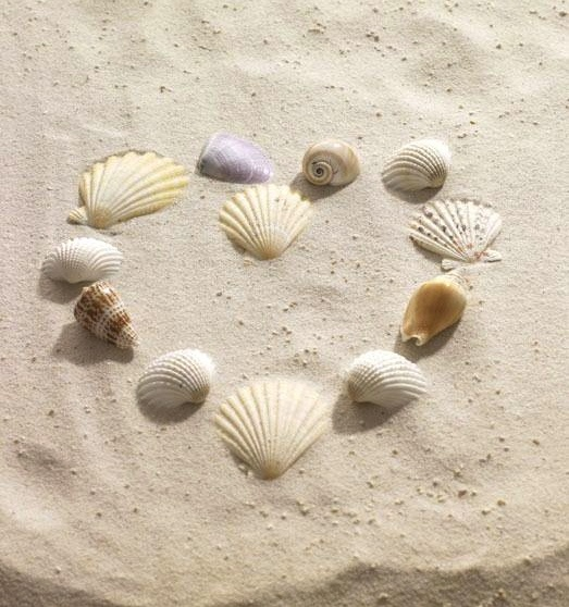 Seashells ~ A day at the beach.... being creative is a #SunFunDay