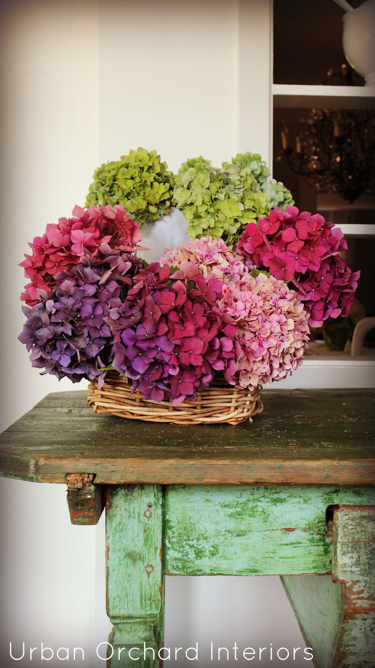 Beautiful Dried Hydrangeas: