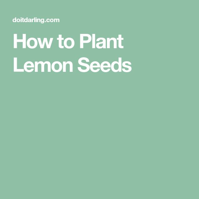 how to grow lemon plant from seeds