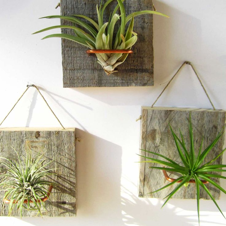 Wall Mounted Air Plants - Set of 3 - Under the Stars Collection - Dot & Bo
