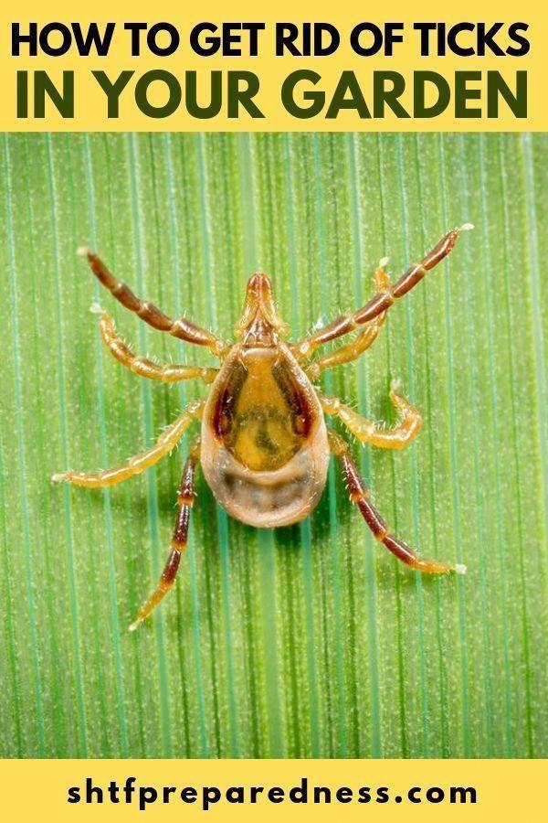 How To Get Rid Of Ticks In Your Garden #ticks #gardening # ...
