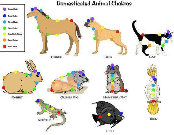 Ce tableau permet de localiser les 7 chakras sur les animaux domestiques (animaux de compagnie). Remarque : certains animaux nont pas tous les