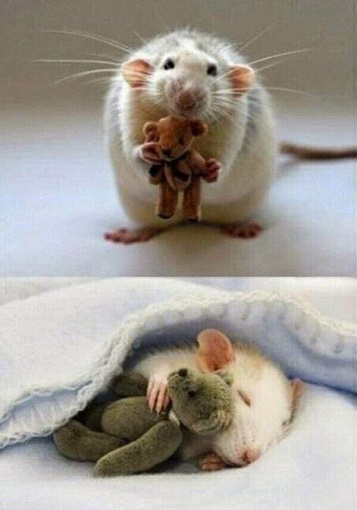 For anyone feeling a bit sad, here's a picture from a woman who makes Teddy Bears for her pet mouse