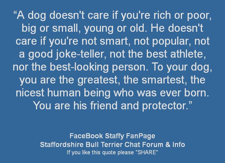 Dogs are pretty smart ! We could all learn a lesson from our dogs.