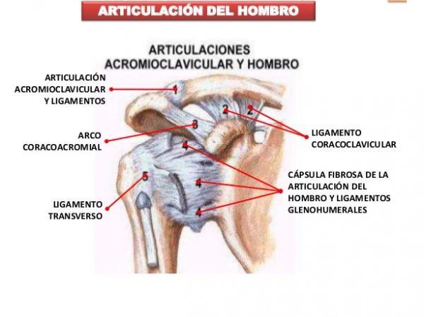 todas las articulaciones del hombro