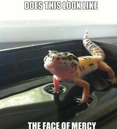 L.G. memes on Pinterest | Leopard Geckos, Lizards and Lizard Craft