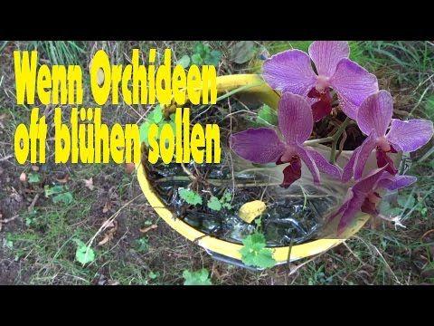 Orchidee umtopfen und durch Kindel vermehren - YouTube