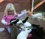 Our small private zoo in the east of Pretoria, has now been open for 8 years. We have over 55 bird species and 40 varieties of animals. School groups and families are welcome to bring picnic lunches which they can enjoy under the trees while they learn about our animals, how to feed them and care for them. Our touch farm area has a variety of safe animals which children are allowed to handle, cuddle and feed.