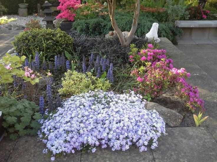 In de verhoogde u-blokken bak staan vaste planten en azalea's.   De bak is 2000 aan gelegd. Op de voorgrond: Phlox G.F. Wilson (kruipende Phlox).