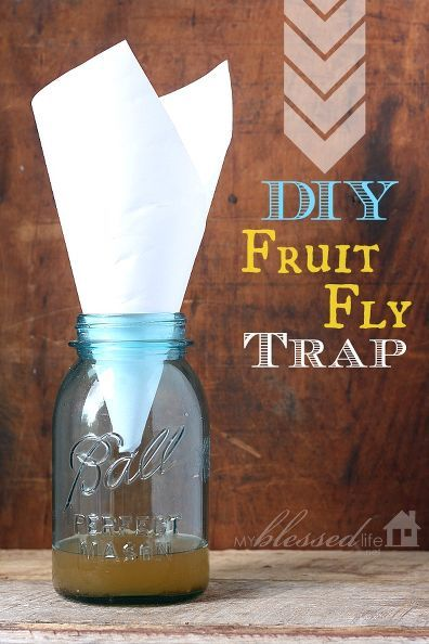get rid of fruit flies diy fruit fly trap dish detergent. Black Bedroom Furniture Sets. Home Design Ideas