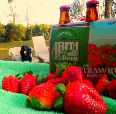 Good flavor for those who like fruited beers.  From Abita Springs, LA