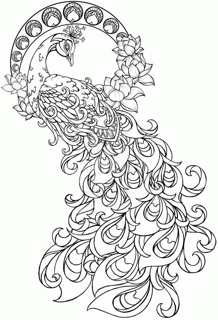 Image result for adult coloring pages peacock Boyama