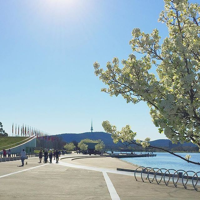 "The city has come to life with glorious blossoms, the temperature recently passed 20 degrees and our trademark bright blue sky is on show; spring has officially arrived in Canberra. We love this spring image by Instagrammer @haydensault of spring time in Canberra. ""Bring on the warmth!"" #visitcanberra"