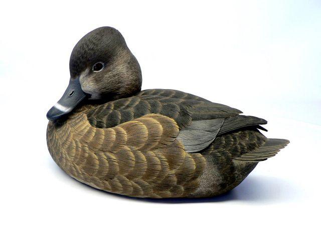 Jason Lucio, World Class Duck Decoys, Bird Carvings,Birds of Prey, Wildfowl Art & Wildlife Paintings