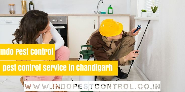 Contact Indo Pest Control for commercial and residential pest control service in #Chandigarh, #Mohali and #Punjab with environment friendly techniques. Get in touch for any kind of pest control service. Write Us on ! indopestcnt@gmail.com, call us on :- +91-9041008868 and Visit for more info :- http://www.indopestcontrol.co.in/ #PestControl #Anti #Termite #Treatment