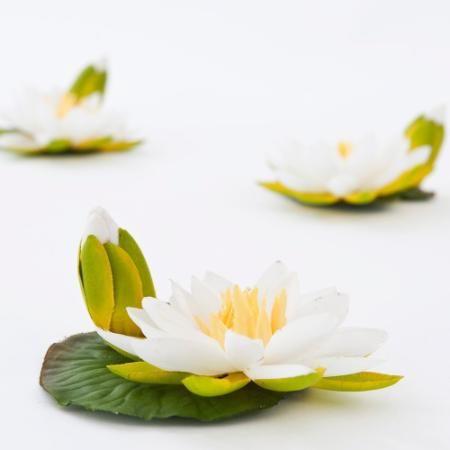 Nenúfar En Flor Blanco Tela Decoración Regalos Morph $ 69.9 - Morph