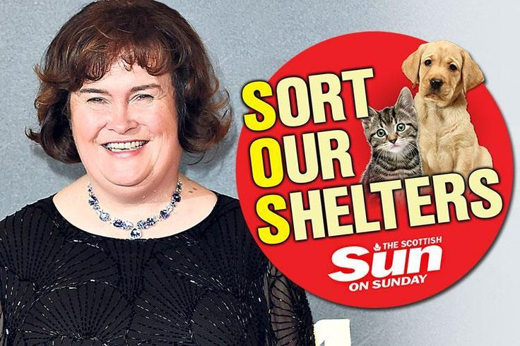 Singing star Susan Boyle hails The Scottish Sun on Sundays successful fight to licence pet rescue