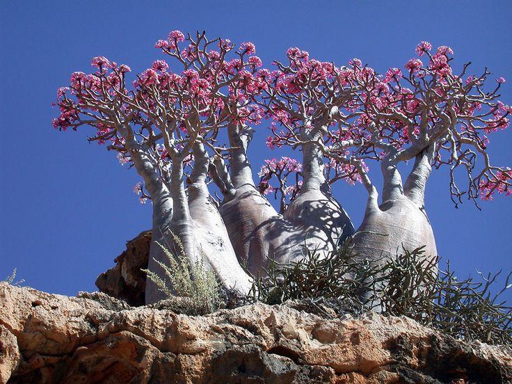 11) Socotra, Yemen