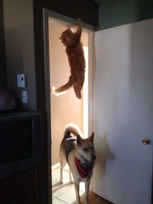 Quando você realmente precisa ficar sozinho por um tempo e seu colega de quarto entra pra perguntar se você quer dar uma saída. | 21 vezes em que gatos foram iguaizinhos a você