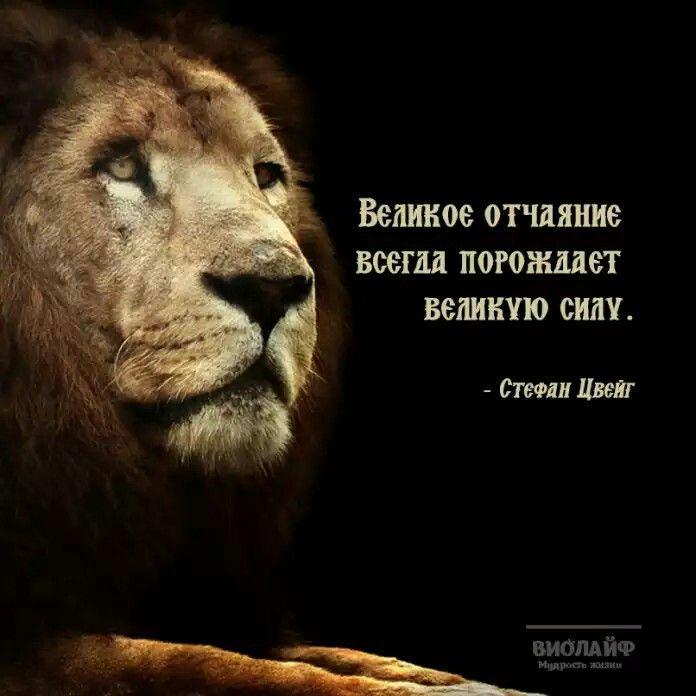 Великое отчаяние всегда порождает великую силу.                      СТЕФАН ЦВЕЙГ