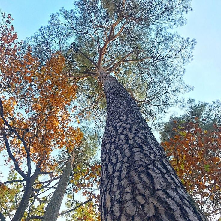Kampinos National Park. . #familywalk #walkwithkids #homeschooling #homeschoolingmom #homepreschool #autumn #familytrip #kampinos #kampinoskiparknarodowy #kampinosnationalpark #treegram #tree #treehuggers #autumnforest #simplelife #theartofsimple #slowlife #slowliving #relax #recharge #forestbathing #colorfulleaves #colorfulforest #explore #perfectday #perfect #day #landscapephotography #neverstopexploring #getoutside