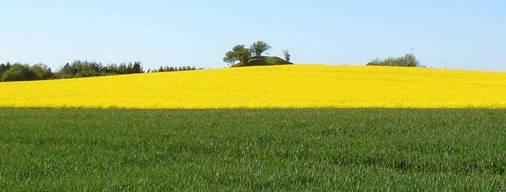Landbrug vs. Miljø