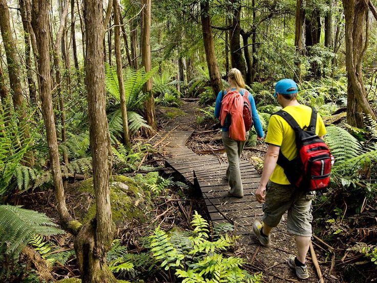 The Best Walking Tracks in the Dandenong Ranges