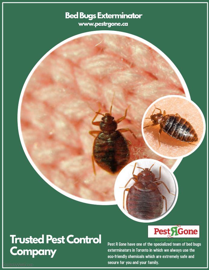 Pestrgone Use The Federally And Provincially Registered Eco Friendly Chemicals Tools Techniques Bed Bug Extermination Bed Bugs Infestation Bug Exterminator