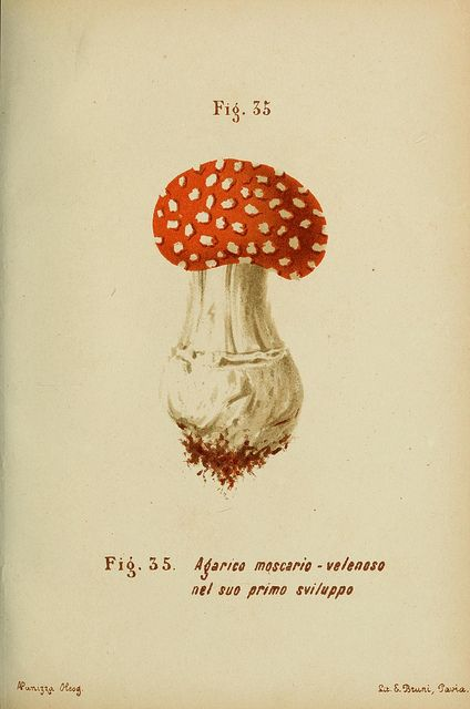 n102_w1150 by BioDivLibrary, via Flickr