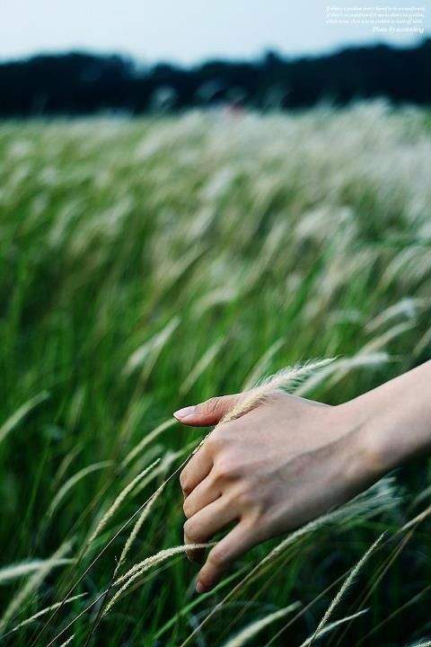 running your fingers through a meadow