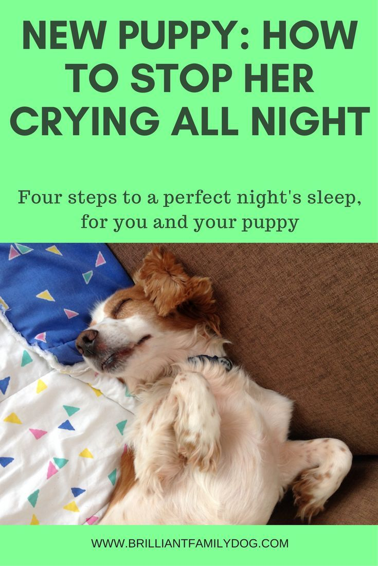 New puppy? how to settle her in fast and ensure a good night's sleep for both of you. Read the article! @KaufmannsPuppy