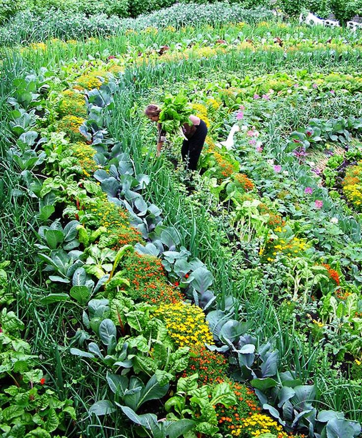 POLYCULTURE: This is a picture of The Eden Project in Cornwall, England. Unlike conventional monoculture planting, this polyculture system diversifies the soil life, making plants less susceptible to pests and disease.