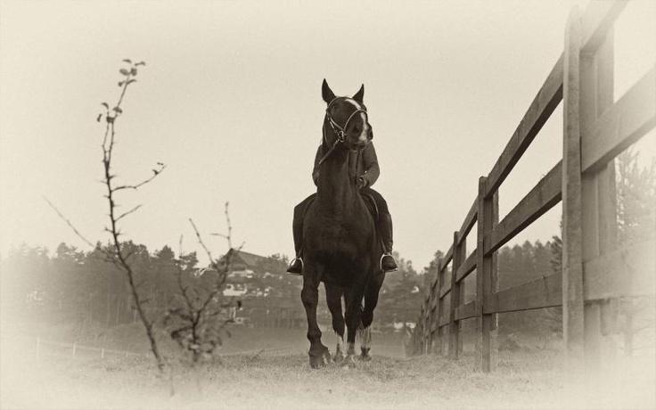 Allusion - a real Oldenburg warmblood horse with character! Hotel & Resort SPA Termy Medical WARMIA PARK in Poland (Warmia and Masuria, Pluski near Olsztyn)
