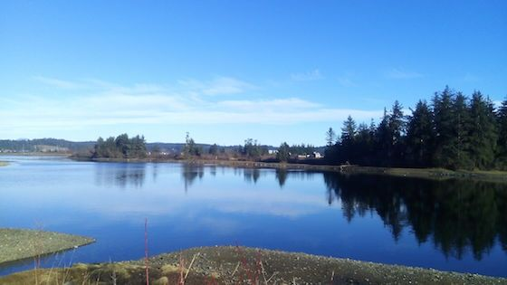 City and community partners clean up Campbell River estuary :: AFTER photo