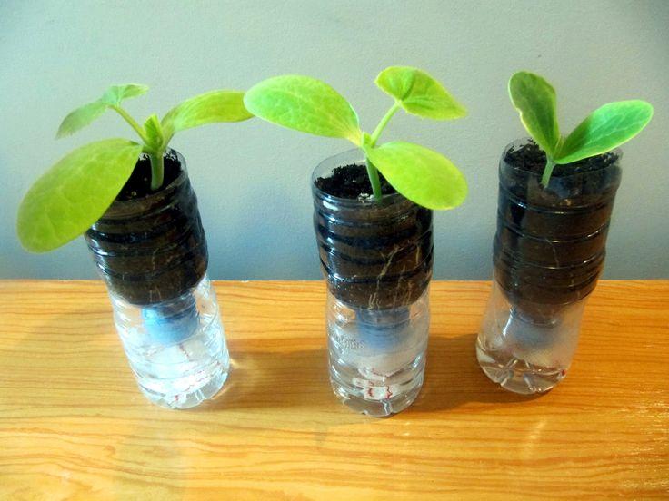 Sistema de macetas autorriego con botellas de plástico -  Self-watering ...